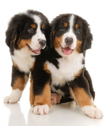 House Training Your Dog - Puppy Image