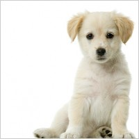 Private Dog Training - Personal Dog Trainer
