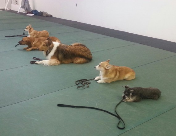 dog boarding and training